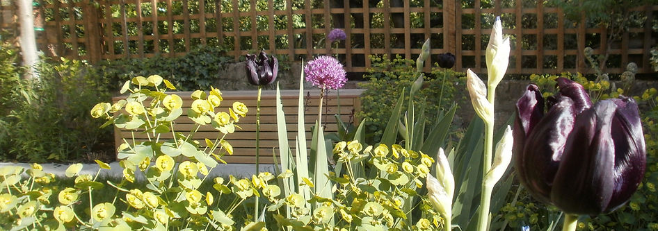 Tulips and Alliums in font of a slatted timber bench in a sunny garden
