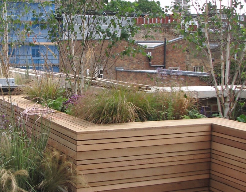 Silver birch trees and grasses in a wooden raised bed on a roof terrace