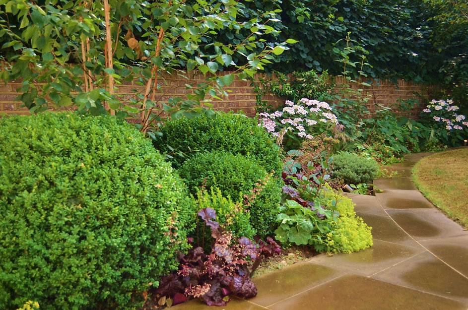 Group of large clipped buxus balls in a flowerbed next to a sawn york stone patio