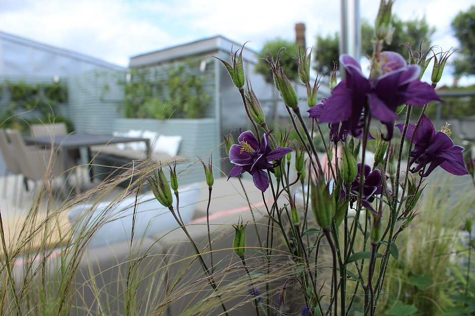 Close up of purple flowers against a backdrop of a blue roof terrace garden