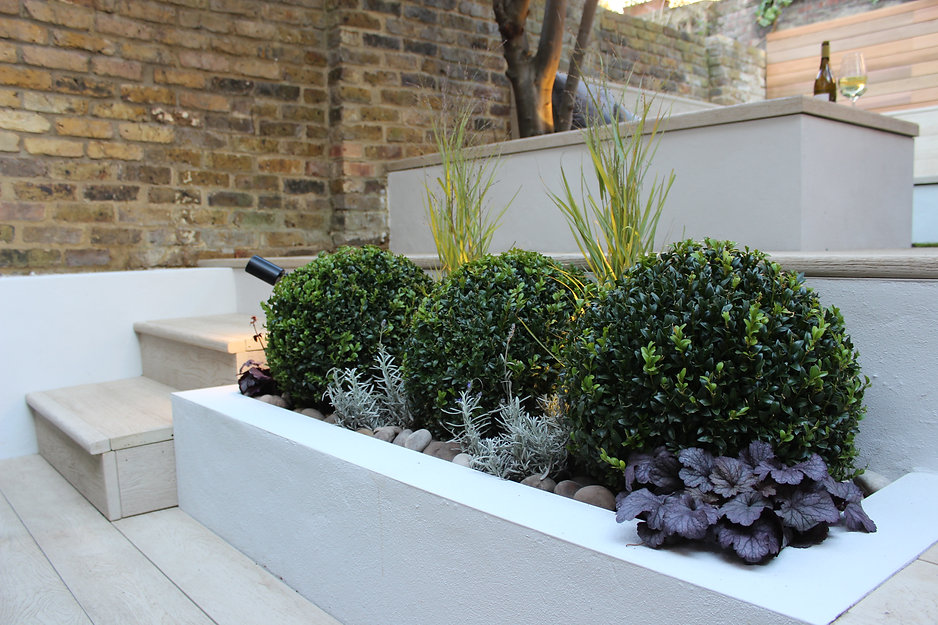 Three clipped buxus balls in a raised white rendered planting bed.