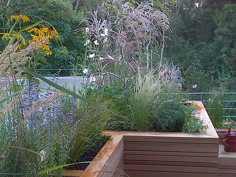 Planting in a riased bed on roof terrace