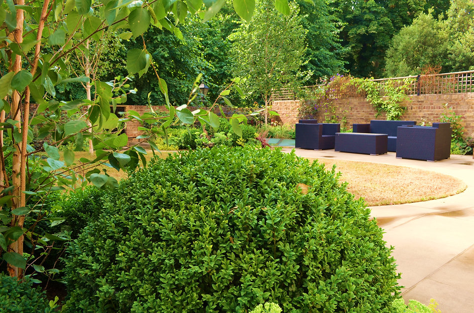 Bright green foliage of trees and shrubs in a stylish garden with a central lawn
