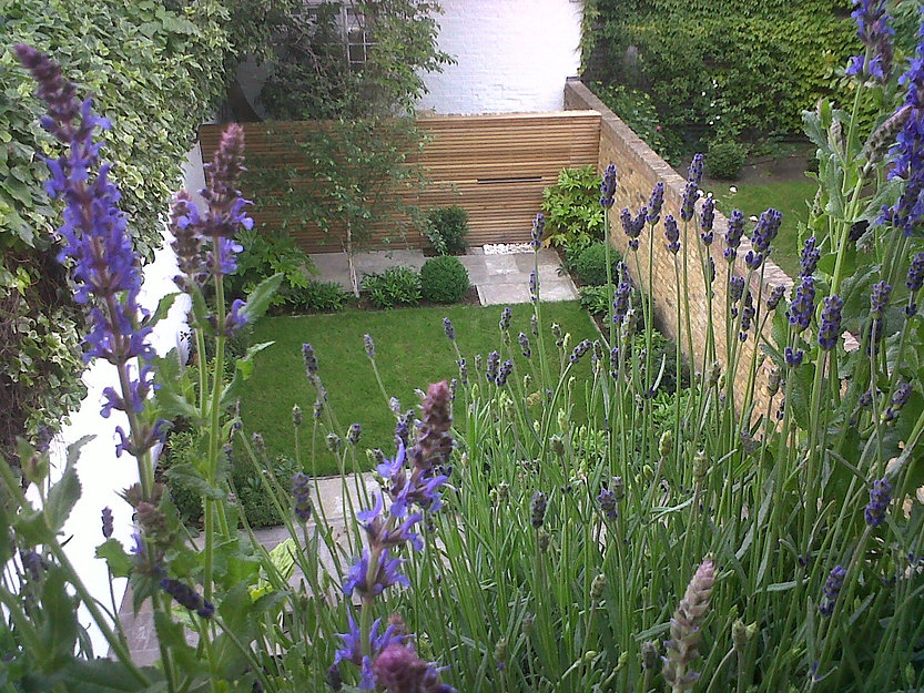 Small garden design with lawn and lavender plants
