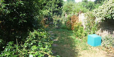 An overgrown garden with scruffy lawn and damaged fence