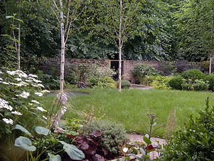 Silver birch trees in a lawn, surrounded by large flowerbeds and brick walls