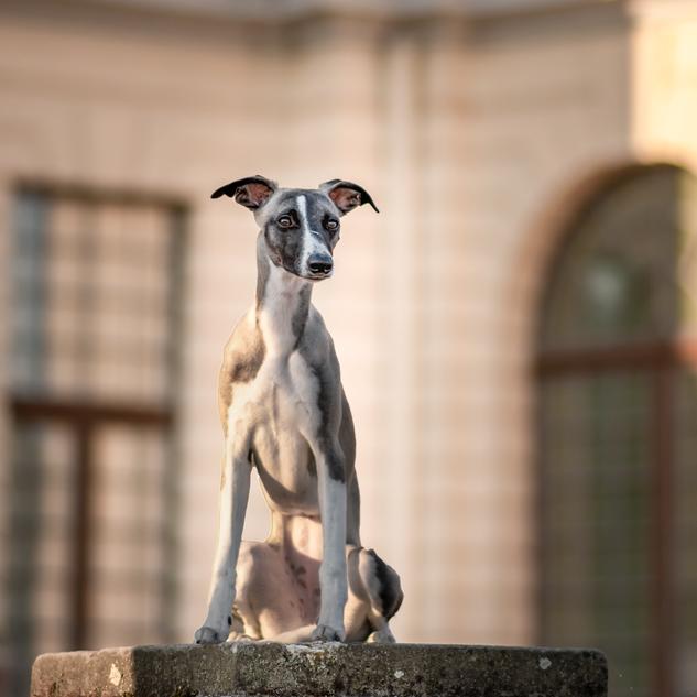 Gigapfotografie Tierfotografie in Kiel, Kreis Plön und Ostholstein Hundefotografie / Pferdefotografie / Kleintierfotografie