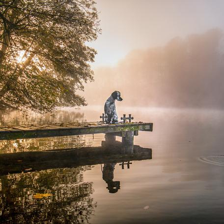 Gigapfotografie / Hundefotografie in Kiel / Schleswig-Holstein