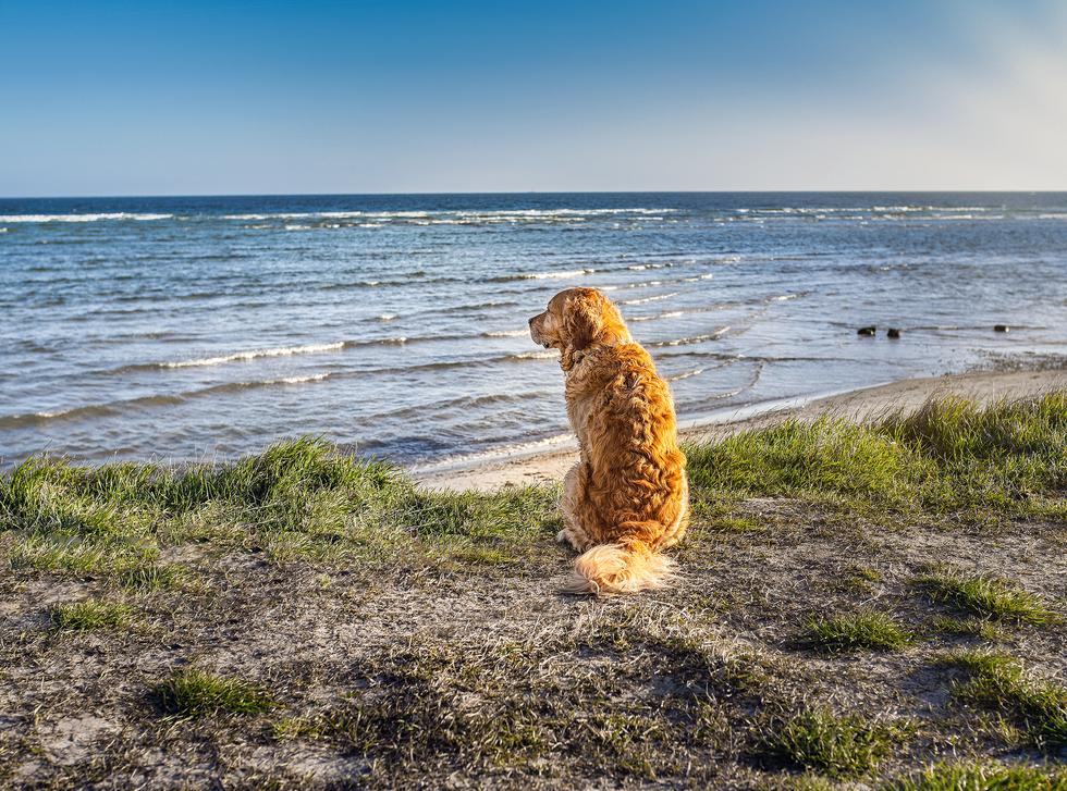 Gigapfotografie - Tierfotografie im Norden