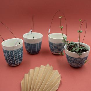 Supension plante