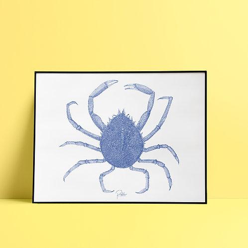 Sérigraphie Araignée de Mer / Bleu