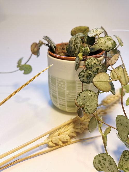 Petite suspension plante