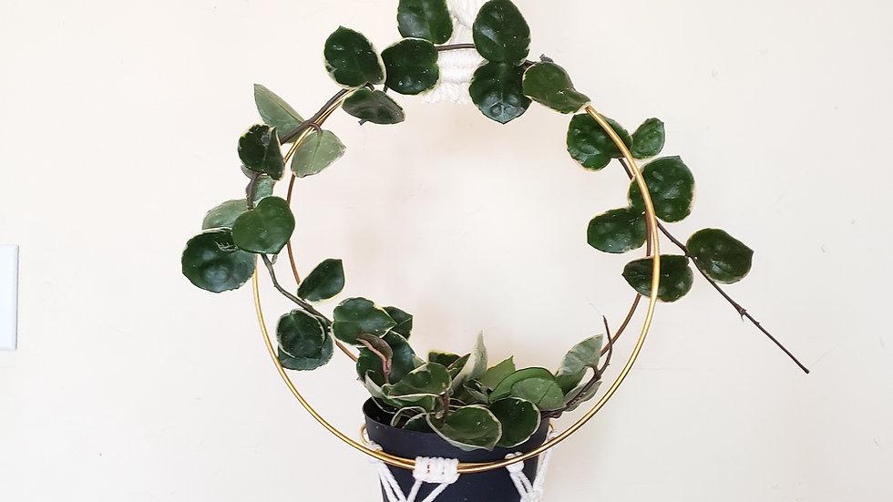 Ring Plant Hanger