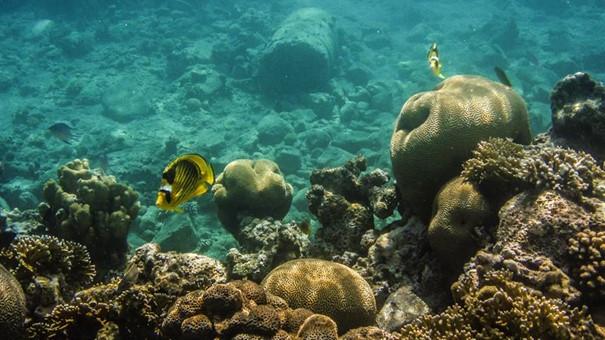 Coral reef (Jana Pilátová)