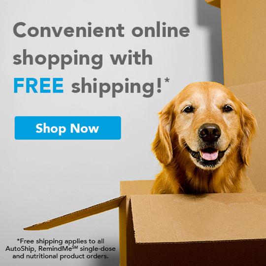 Dog in box for home delivery of Veterinary medications