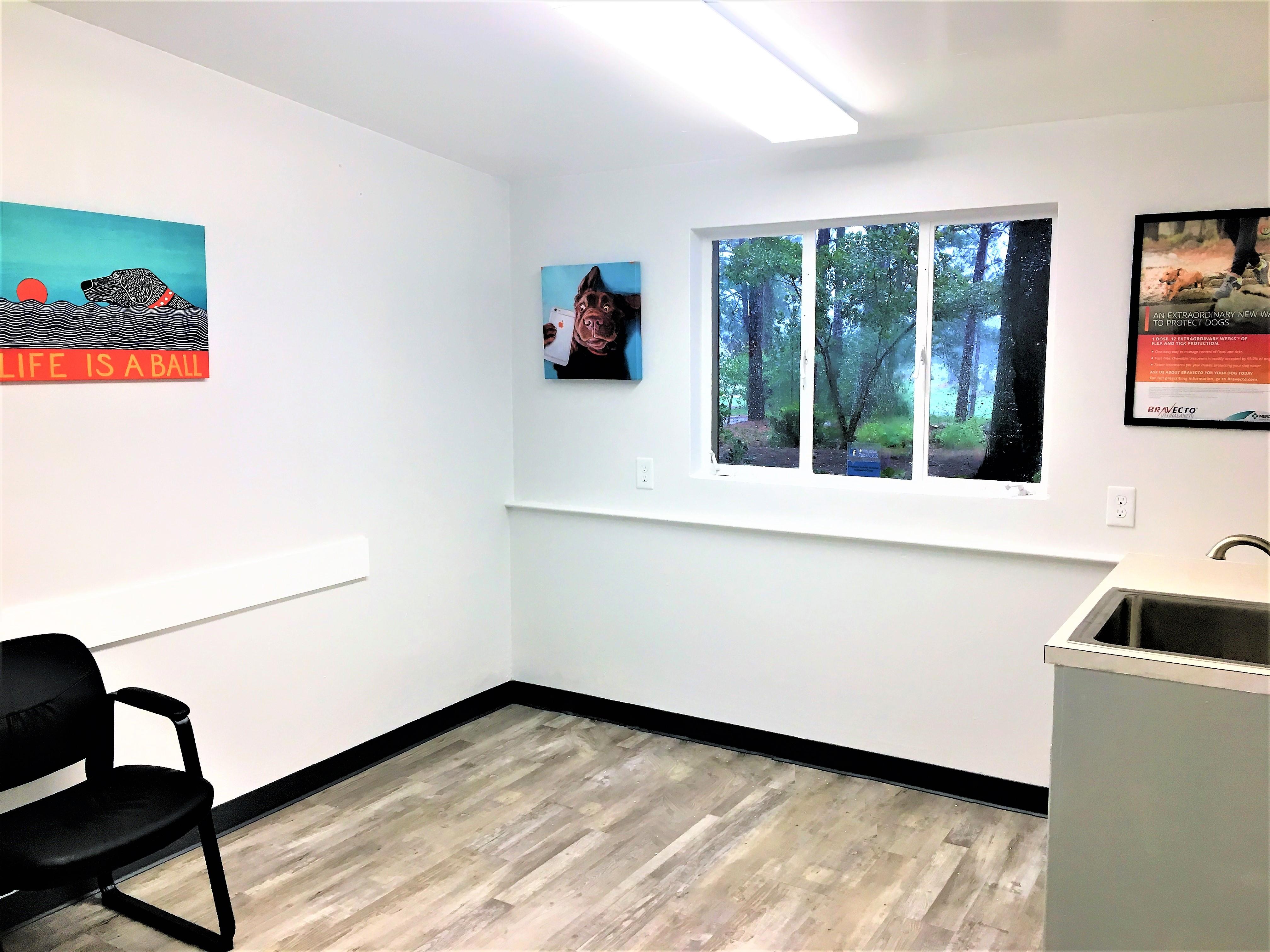 veterinary exam room with art in Pinehurst Southern Pines NC