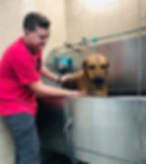 Kennel Staff Giving a Bath