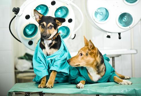 Dog in veterinary clinic