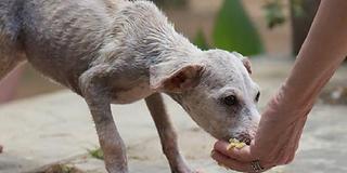 Feeding-stray-dog-660x330.png