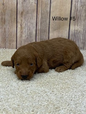 Willow #5.jpg