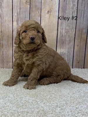 Kiley #2.jpg