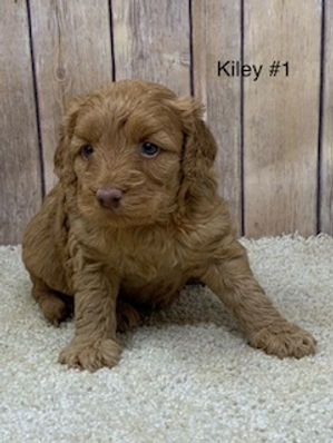 Kiley #1.jpg