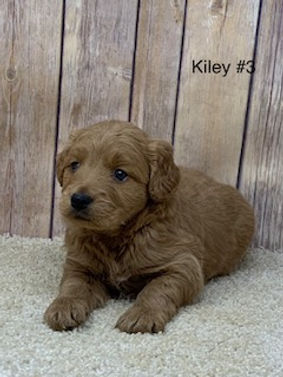 Kiley #3.jpg