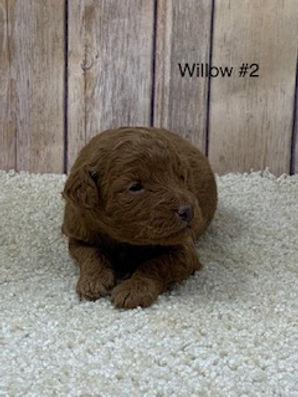 Willow #2.jpg