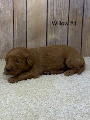 Willow #4.jpg
