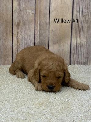 Willow #1.jpg