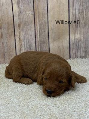 Willow #6.jpg