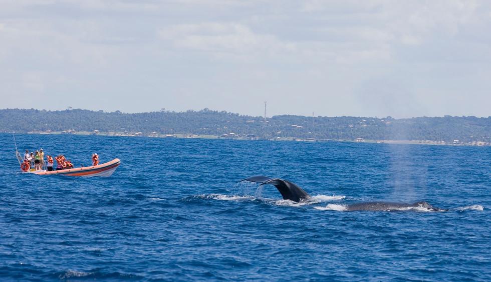 Turismo de observação de Baleias