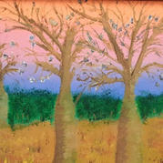 Boab Trees - East Kimberley