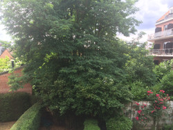 vue sur jardin