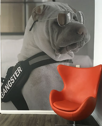 Dog small.jpg