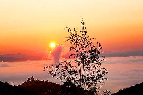 Foggy Sunrise, San Marcos CA