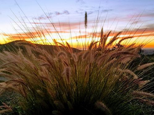 Coronado Hills Sunset