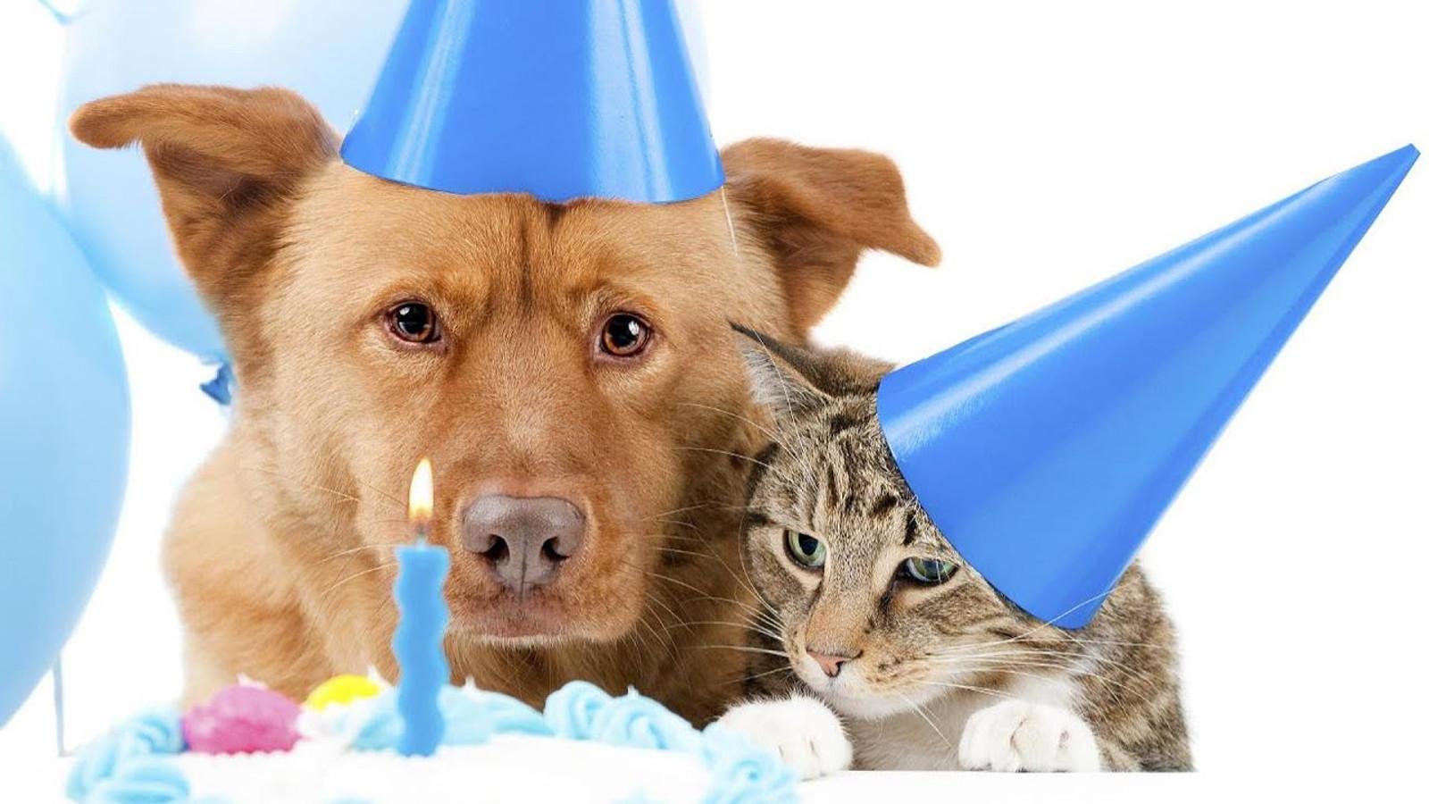Открытка с днем рождения кот и собака, картинки для детей