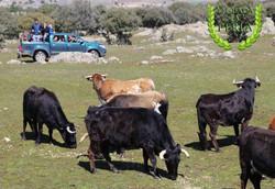 visita_guiadas_campo_4x4_ganaderia_turismo_naturaleza_ocio_familia_segovia_IMG_3200