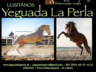Yeguada La Perla os desea Feliz Navidad