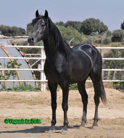 HURCO_LONDRINO_ALFAMA_84_DSC1431