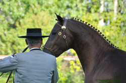 2.ebano_campeonato_lusitanos_yeguada_la_perla_DSC3073.jpg