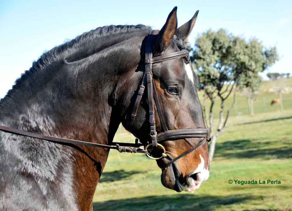 ermitano_lusitano_la_perla_caballo_DSC1264.jpg