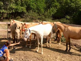 Gonzalez Horse Show contará con yeguas de La Perla