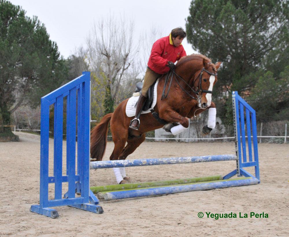 alcaide_salto_obstaculos_la_perla_DSC0504.jpg