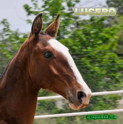 LUCERO_DSC1520