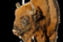 perfil-bisonte_DSC8846.png