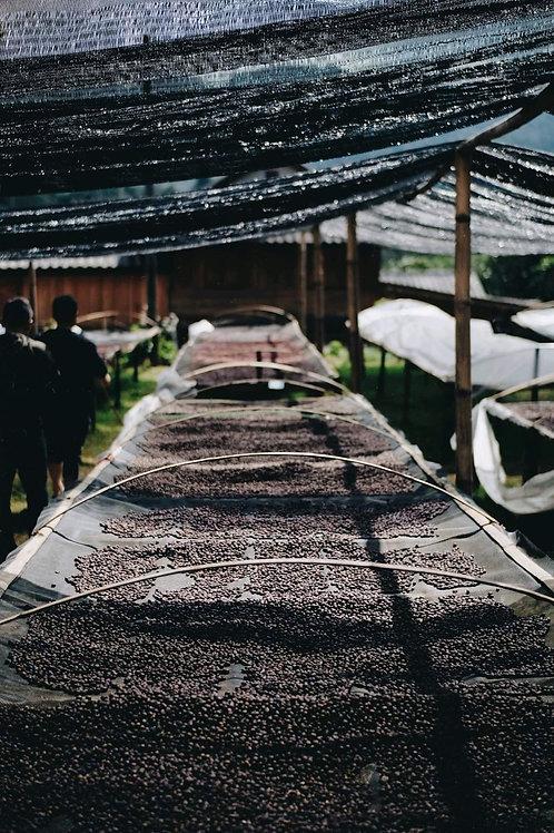 Lica Coffee Estate 2021 (natural cool drying) แม่แดดน้อย จ.เชียงใหม่ {filter}