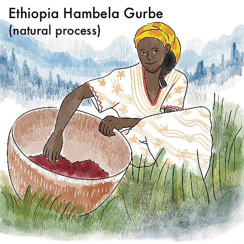 Ethiopia Hambela Gurbe (Natural Process) {Filter}
