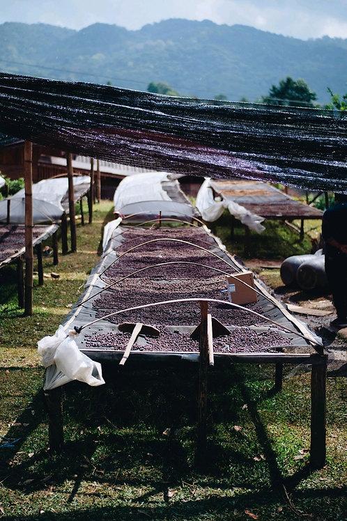 Lica Coffee Estate 2020 บ้านแม่แดดน้อย เชียงใหม่ (natural process) 11g {DripBag}